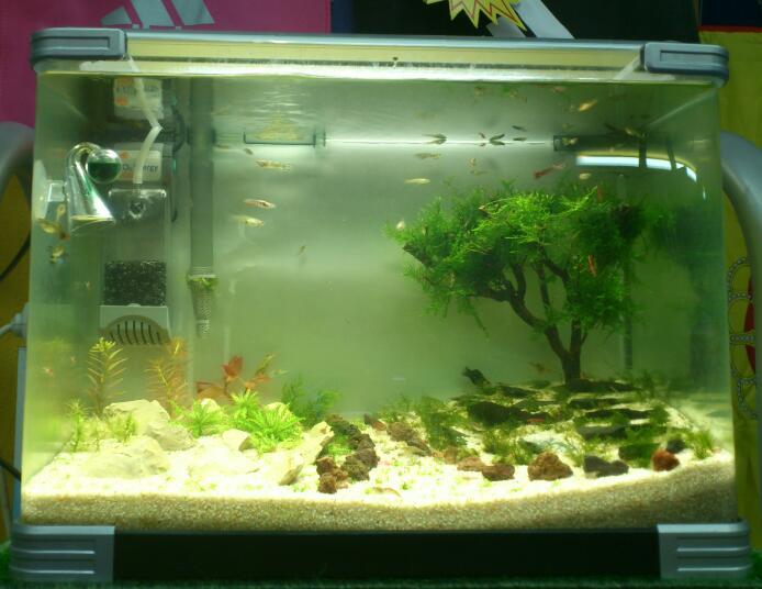 nuevo acuario 34l DSC_1217-1