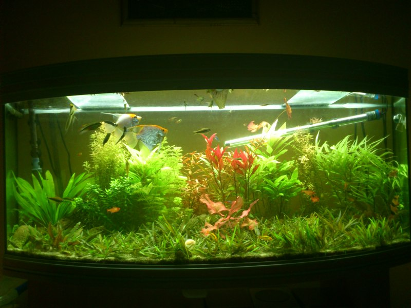 actualizacion acuario 240l DSC_1262
