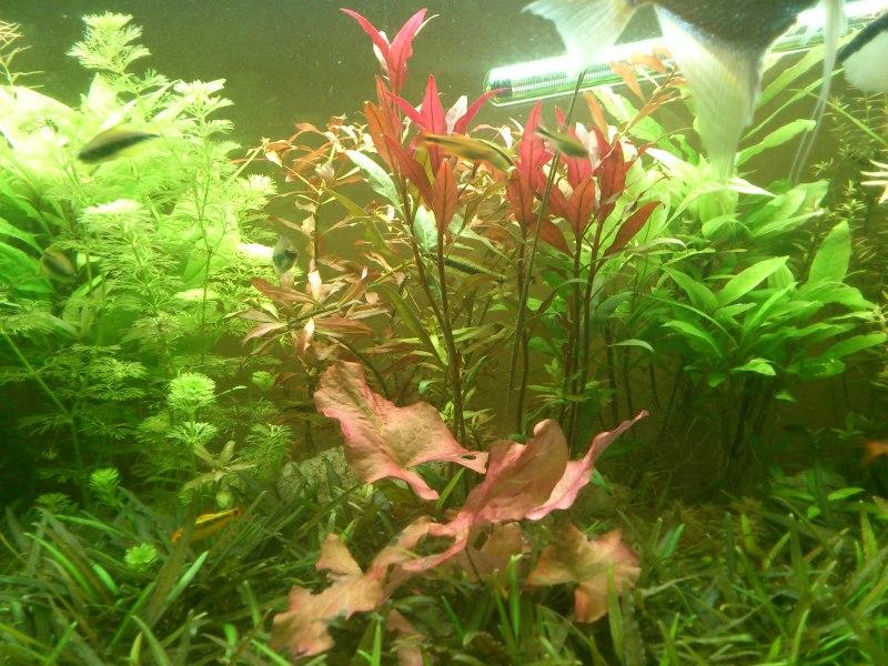 actualizacion acuario 240l DSC_1263