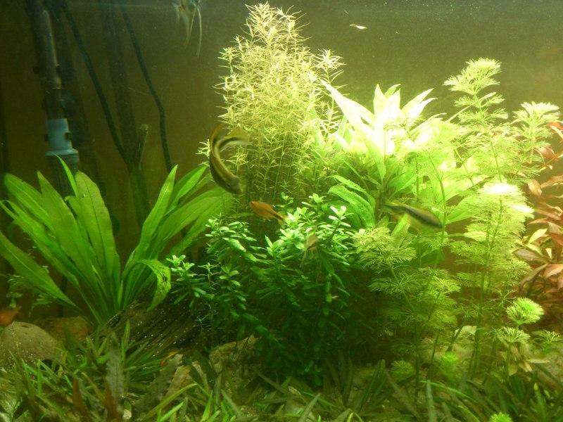 actualizacion acuario 240l DSC_1264