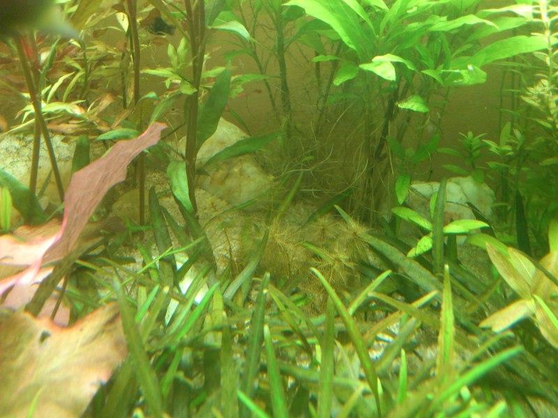actualizacion acuario 240l DSC_1266