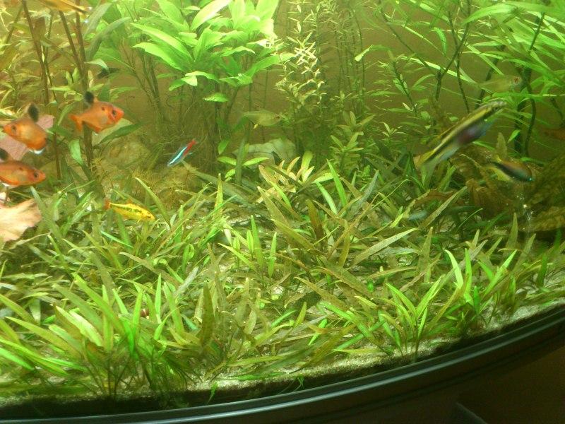 actualizacion acuario 240l DSC_1267