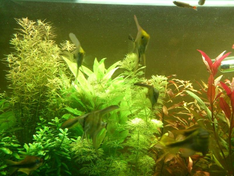 actualizacion acuario 240l DSC_1268