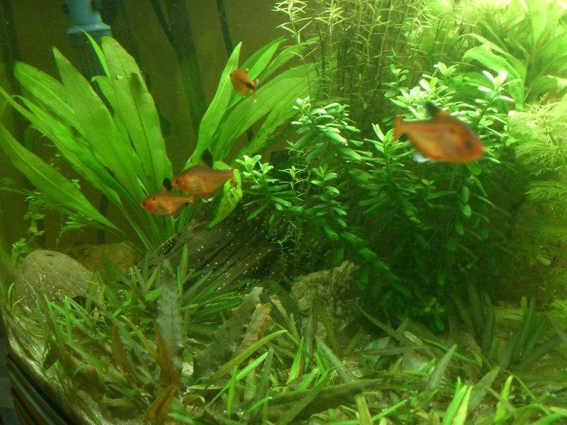 actualizacion acuario 240l DSC_1269