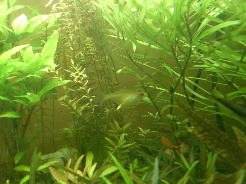 actualizacion acuario 240l DSC_1274