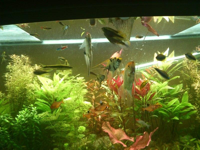 actualizacion acuario 240l DSC_1283