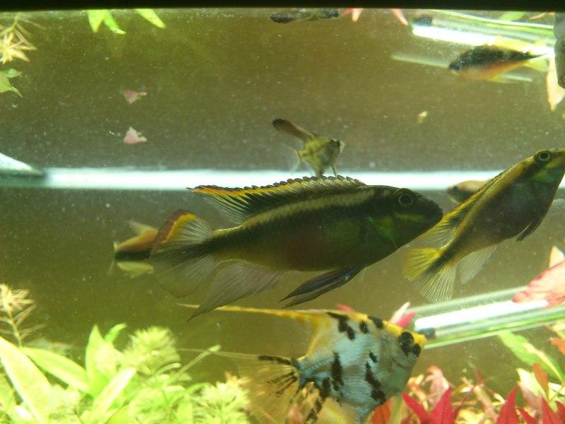 actualizacion acuario 240l DSC_1290