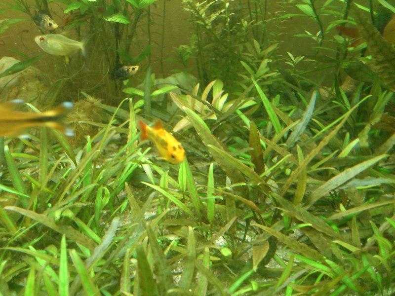 actualizacion acuario 240l DSC_1297
