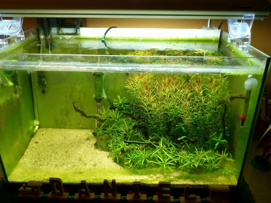 adios acuario panoramico de 76l y hola acuario rectangular de 60l - Página 2 DSC_1884modified_zpsc89a25cb