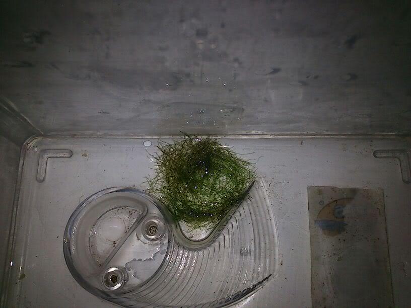 que puñetera alga es esta? IMG-20120116-WA0000