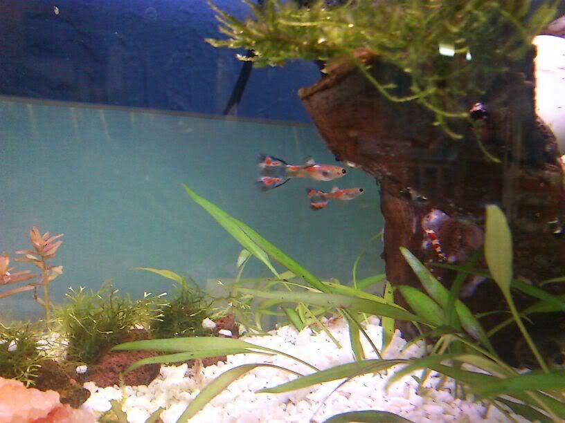 habitantes de mi nuevo acuario-gambario IMG-20120124-WA0019