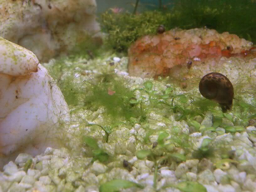 otra vez la puñetera alga IMG-20120227-WA0013