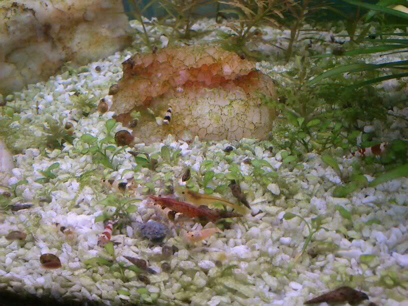 mi primer mini acuario IMG-20120305-WA0000
