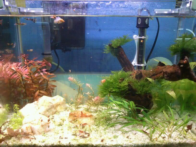 mi primer mini acuario IMG-20120305-WA0001