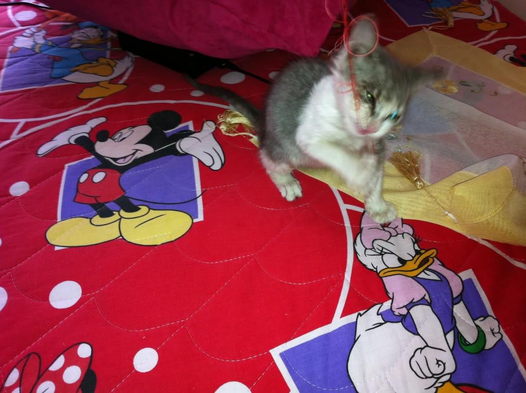 πάλι μου αφήσανε γατάκι, αυτη τη φορά στην πυλωτή - Σελίδα 3 IMG_0324