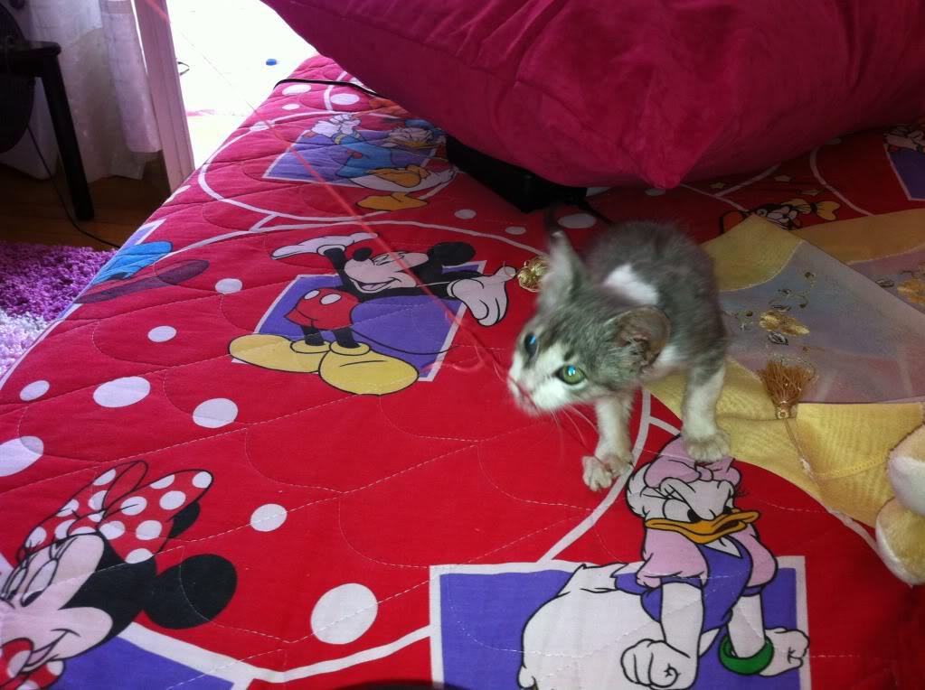 πάλι μου αφήσανε γατάκι, αυτη τη φορά στην πυλωτή - Σελίδα 3 IMG_0325