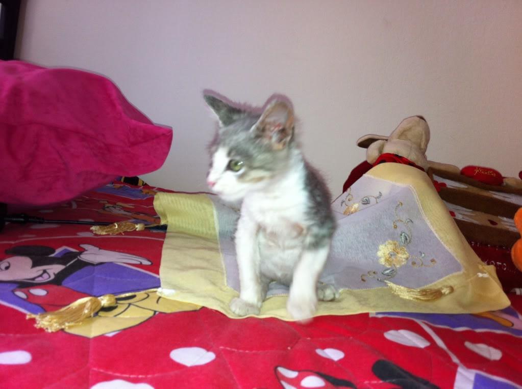 πάλι μου αφήσανε γατάκι, αυτη τη φορά στην πυλωτή - Σελίδα 3 IMG_0330