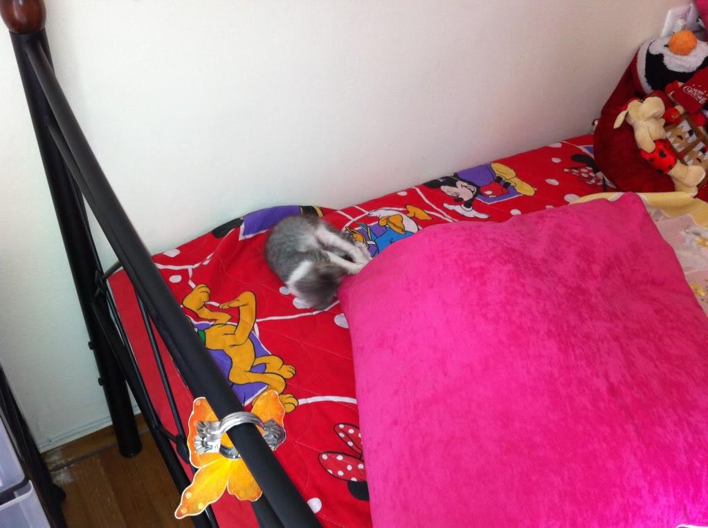 πάλι μου αφήσανε γατάκι, αυτη τη φορά στην πυλωτή - Σελίδα 4 IMG_0337
