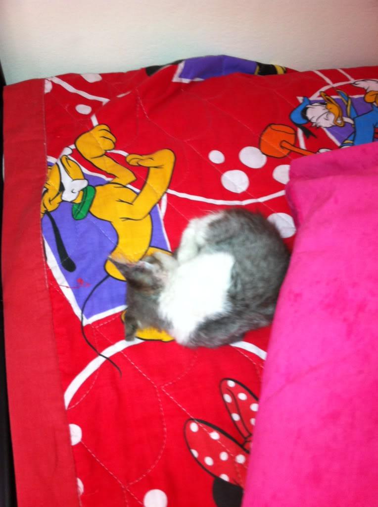 πάλι μου αφήσανε γατάκι, αυτη τη φορά στην πυλωτή - Σελίδα 4 IMG_0338