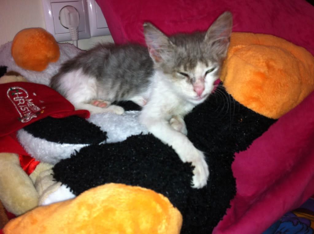 πάλι μου αφήσανε γατάκι, αυτη τη φορά στην πυλωτή - Σελίδα 4 IMG_0339