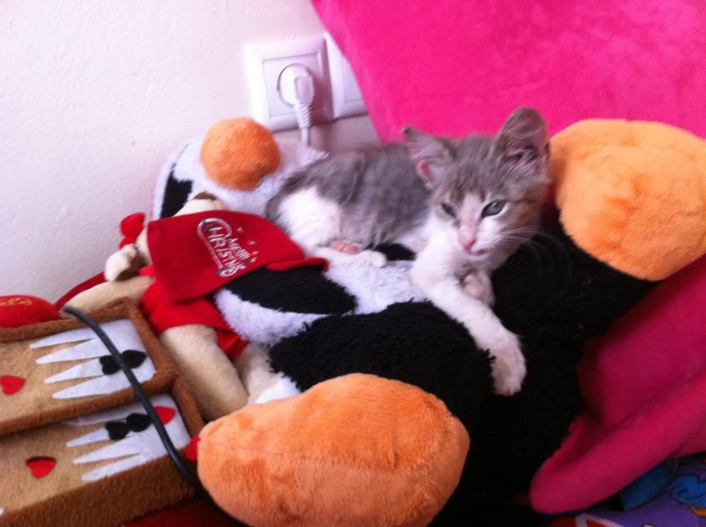 πάλι μου αφήσανε γατάκι, αυτη τη φορά στην πυλωτή - Σελίδα 4 IMG_0342