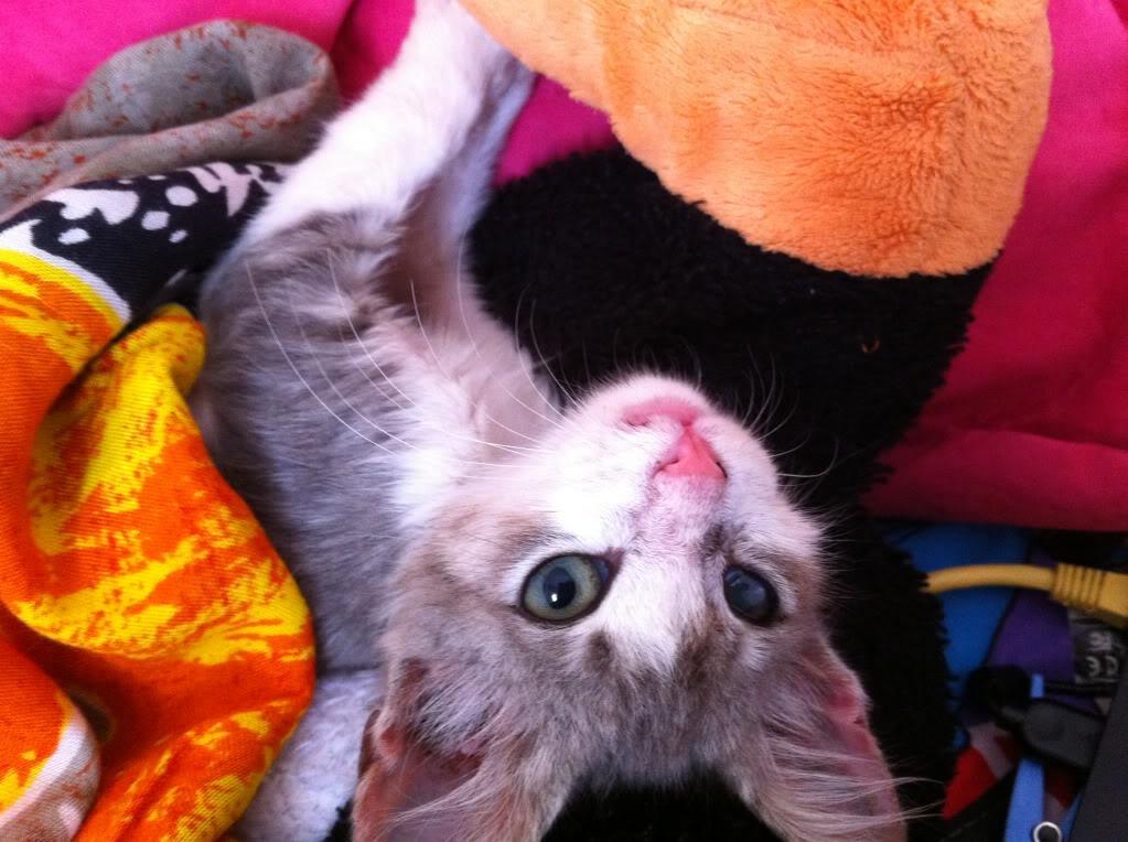 πάλι μου αφήσανε γατάκι, αυτη τη φορά στην πυλωτή - Σελίδα 5 IMG_0361