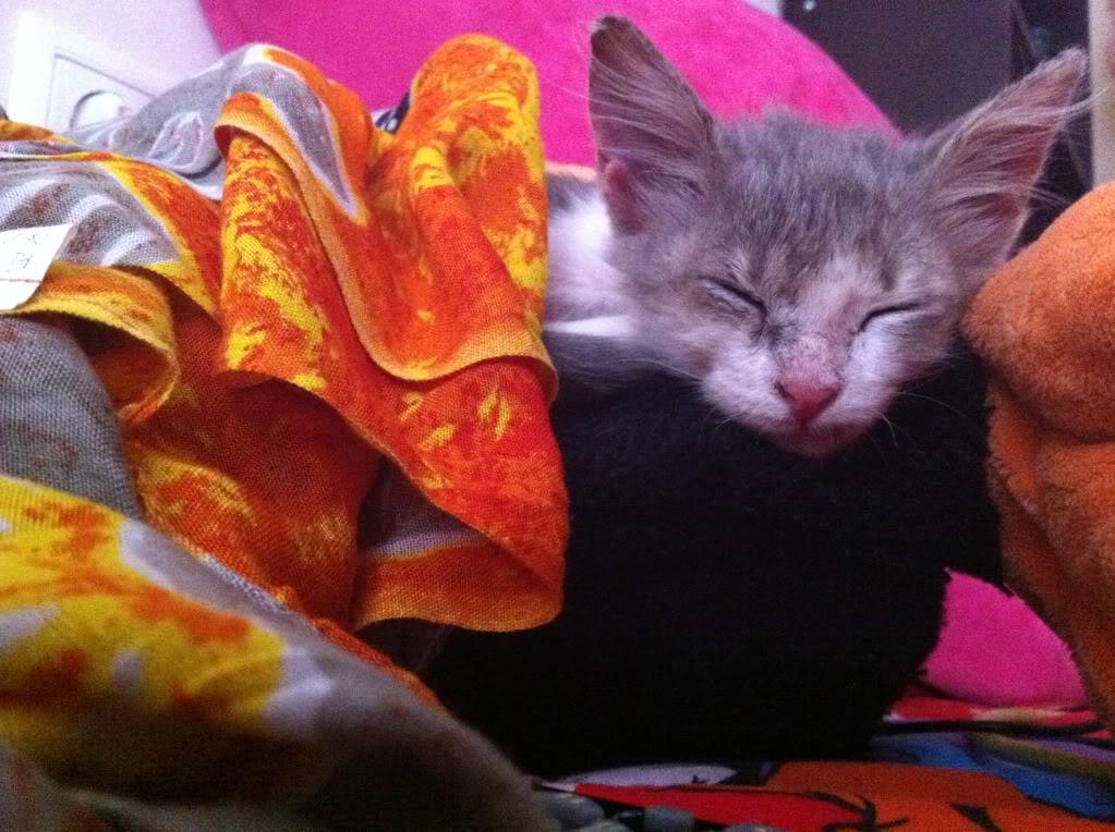 πάλι μου αφήσανε γατάκι, αυτη τη φορά στην πυλωτή - Σελίδα 5 IMG_0368