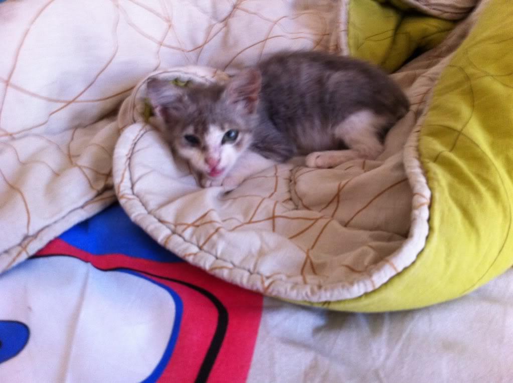 πάλι μου αφήσανε γατάκι, αυτη τη φορά στην πυλωτή - Σελίδα 5 IMG_0374
