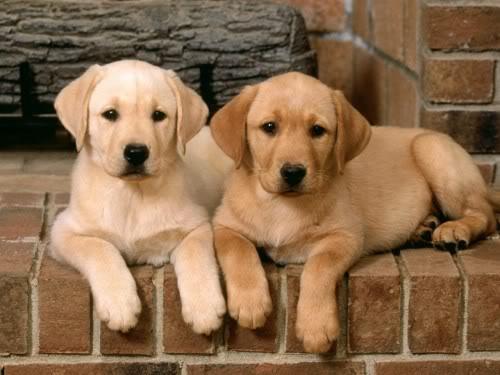 Красивые и добрые собаки 1-10