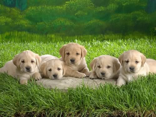 Красивые и добрые собаки 2-7