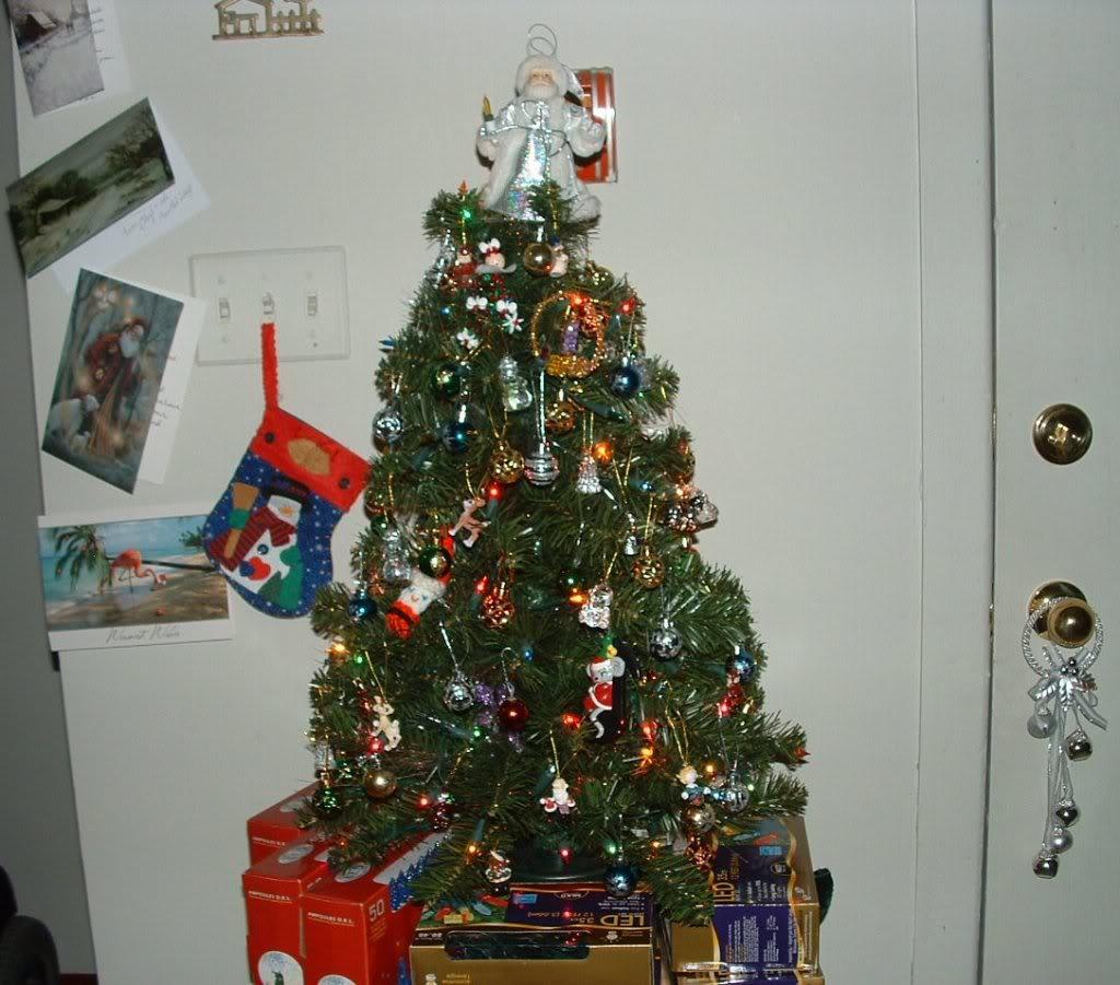 Trish's Tree Daytree