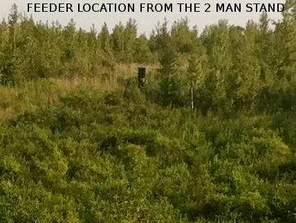 Clear cut food plot tree stand view Tonightshit002