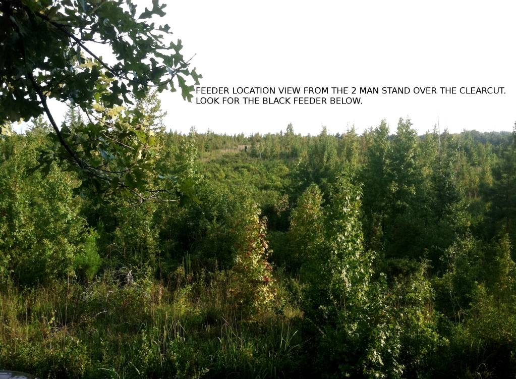 Clear cut food plot tree stand view Tonightshit003