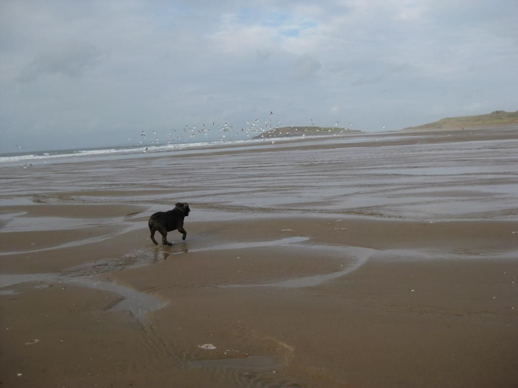 On the beach today (pic heavy) IMG_4500_zps52041cdb