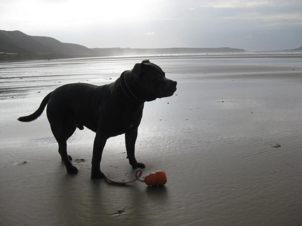 On the beach today (pic heavy) IMG_4510_zps087bc8bf