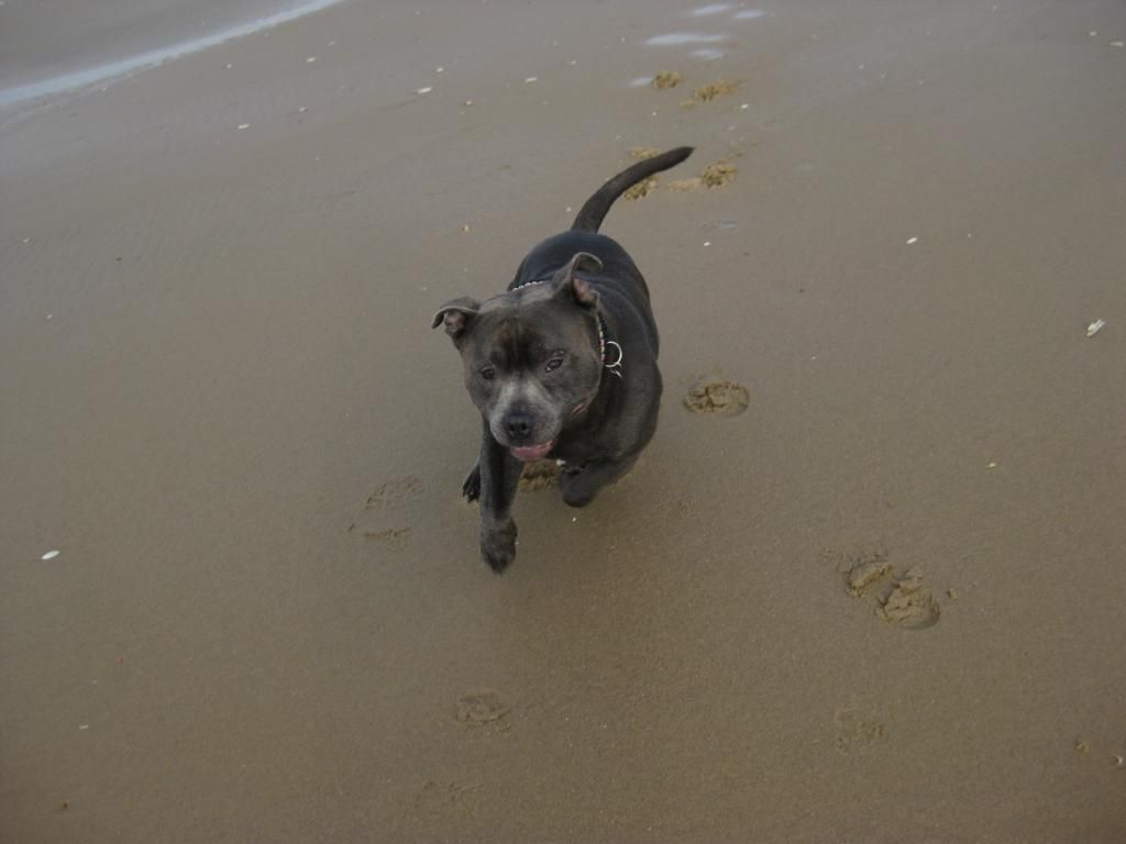 On the beach today (pic heavy) IMG_4518_zpsfba5a939