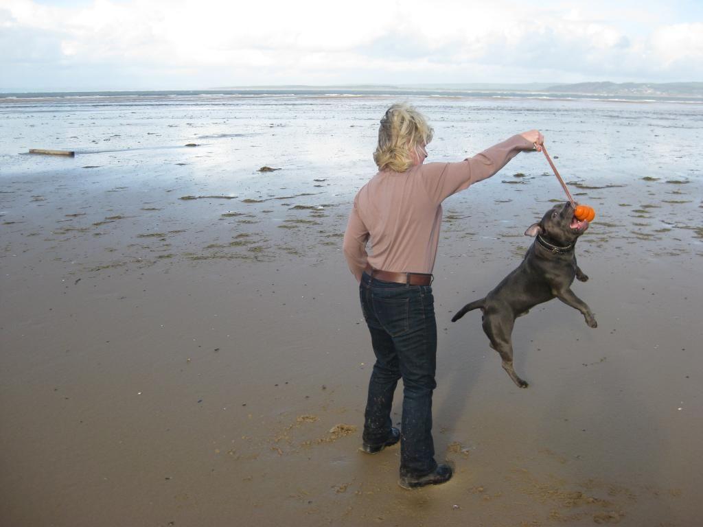 More Vinnie on the beach! (pic heavy)  IMG_4576_zps4b56bedb