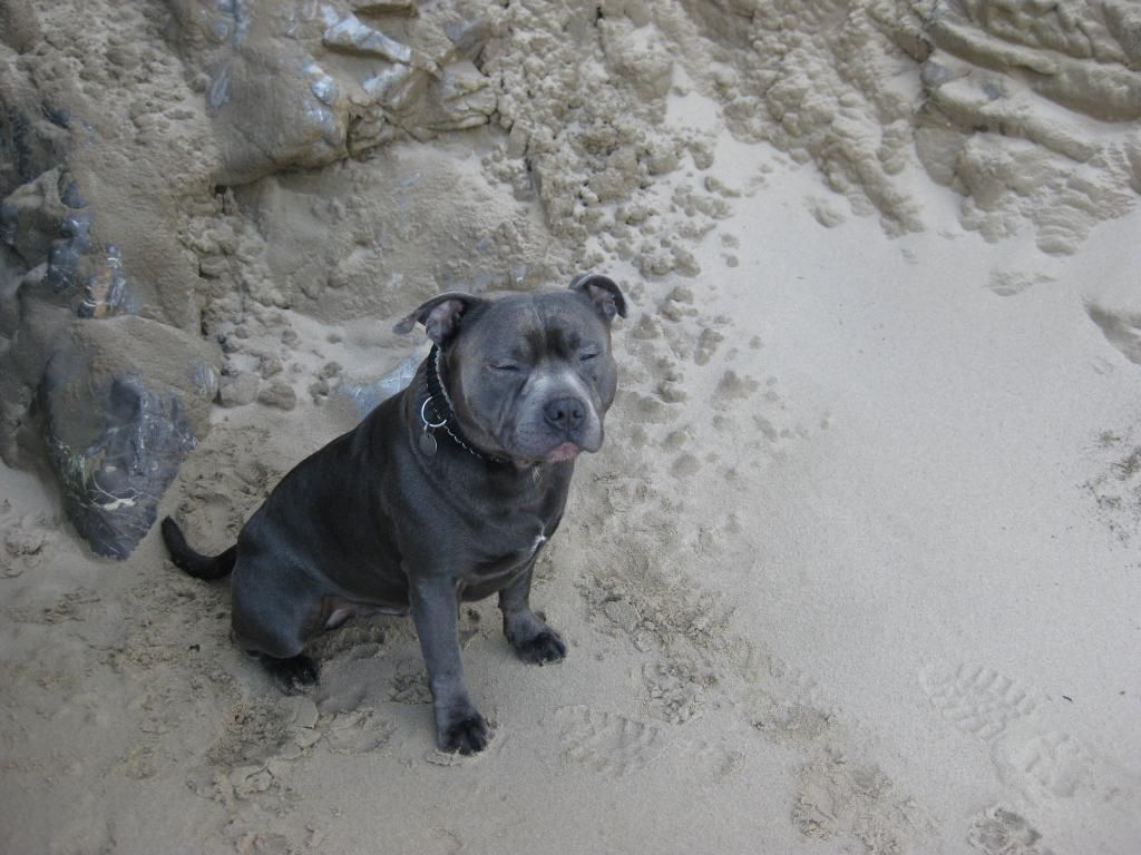 More Vinnie on the beach! (pic heavy)  IMG_4601_zps4ea8d97f