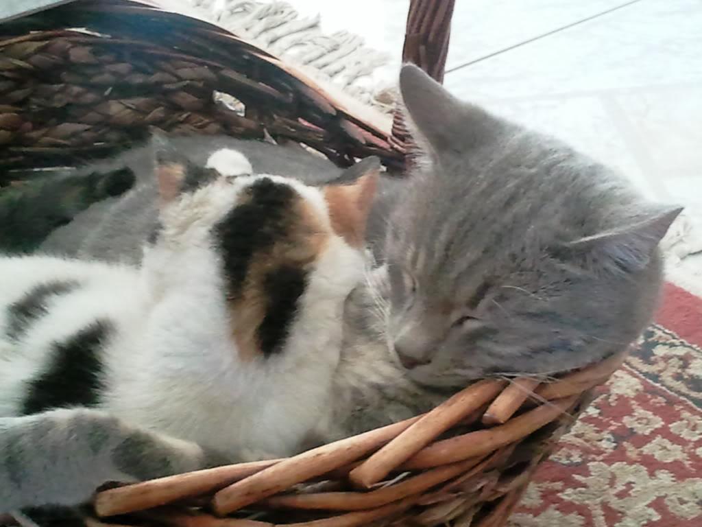 Φεγγάρω η σουρτούκο! - Σελίδα 2 2012-01-31151821