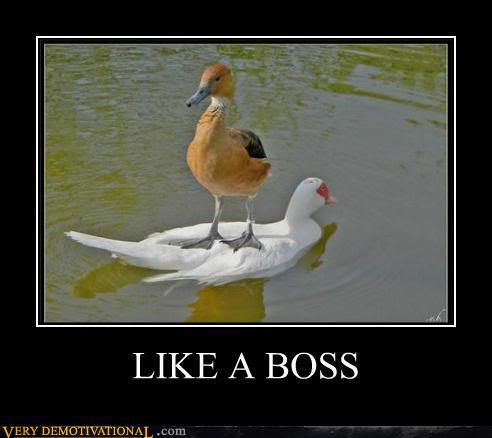 The Demotivational Picture Thread Demotivational-posters-like-a-boss