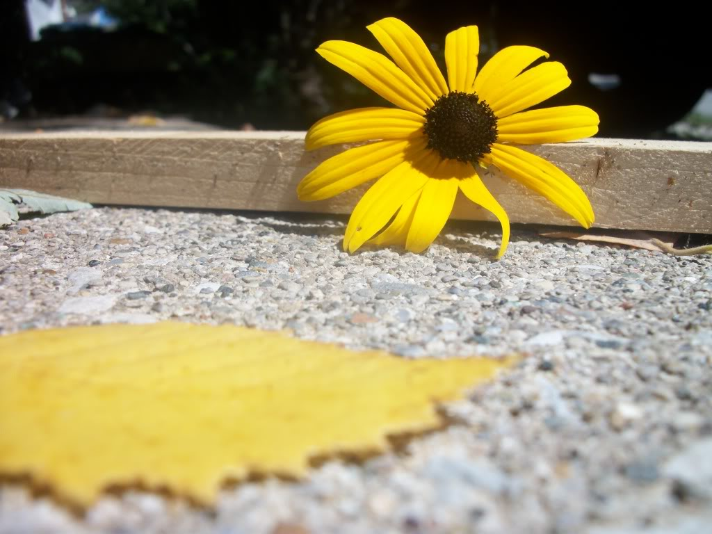 Yes this counts as art.  Yellowflower