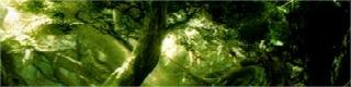 Ent Ormanı