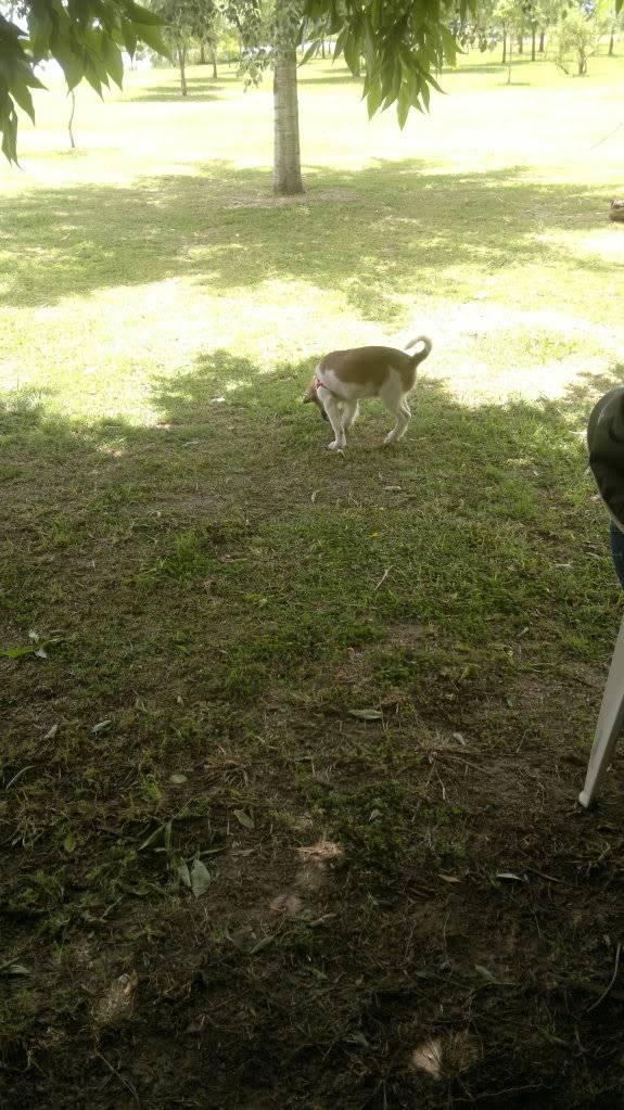 Relatos, Fotos y Videos de la  Rodada a Ranchos Nov 18 2012 2012-11-18-049