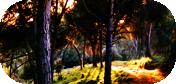 Bosque a las afueras