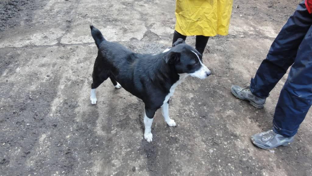Elios, mâle, type Border Collie, né en 2009 DSC05424