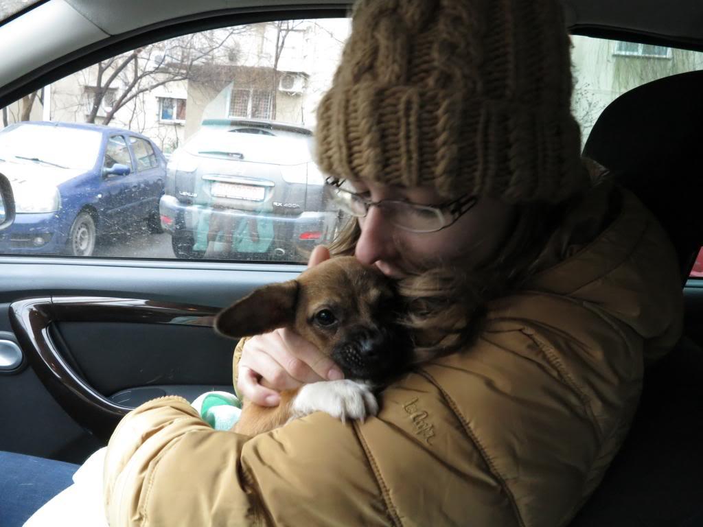 Betty, mini chien, soeur de Dixie IMG_4988
