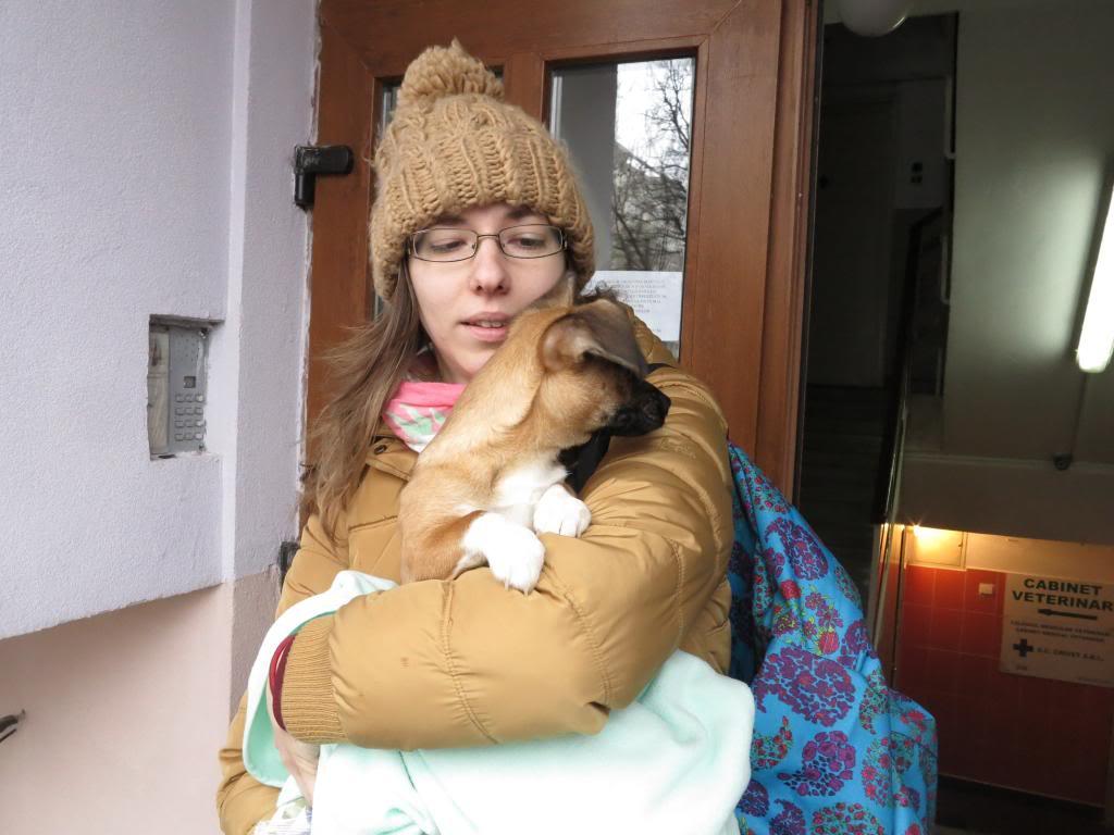 Betty, mini chien, soeur de Dixie IMG_4994
