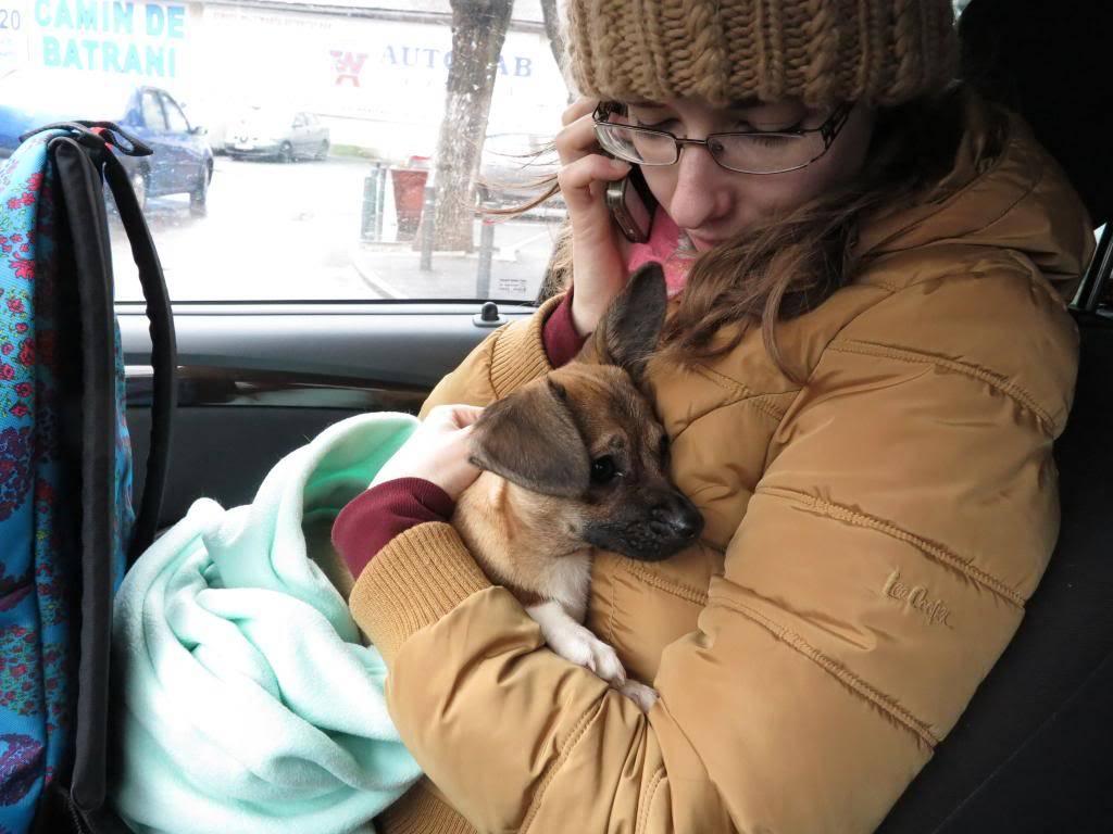 Betty, mini chien, soeur de Dixie IMG_4999