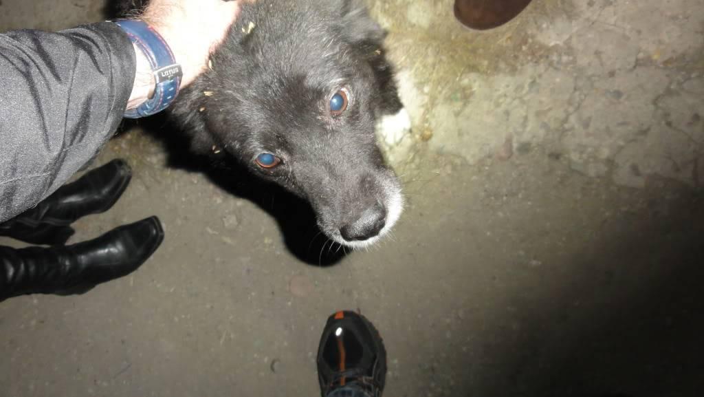 Spike, né en 2005, 7kg, très attaché à l'homme  DSC04247
