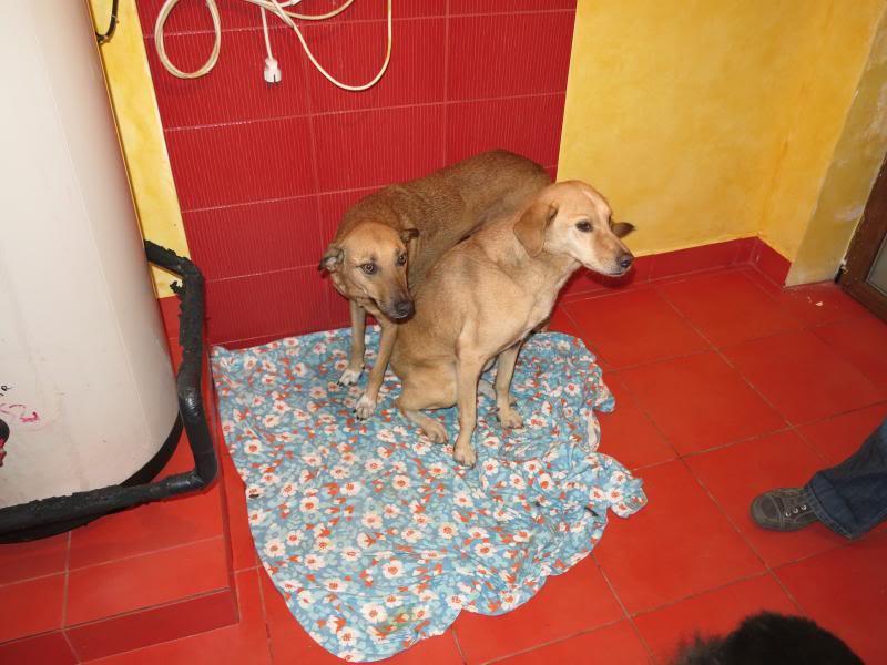 Fetitza, vieille chienne paralysée des membres inférieurs IMG_0130